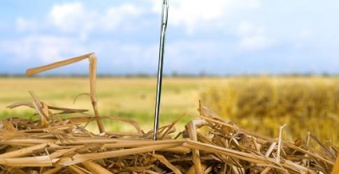 CHLA-Needle-in-a-Haystack.jpg