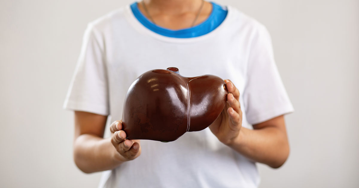 Teenager holding a model of a liver organ
