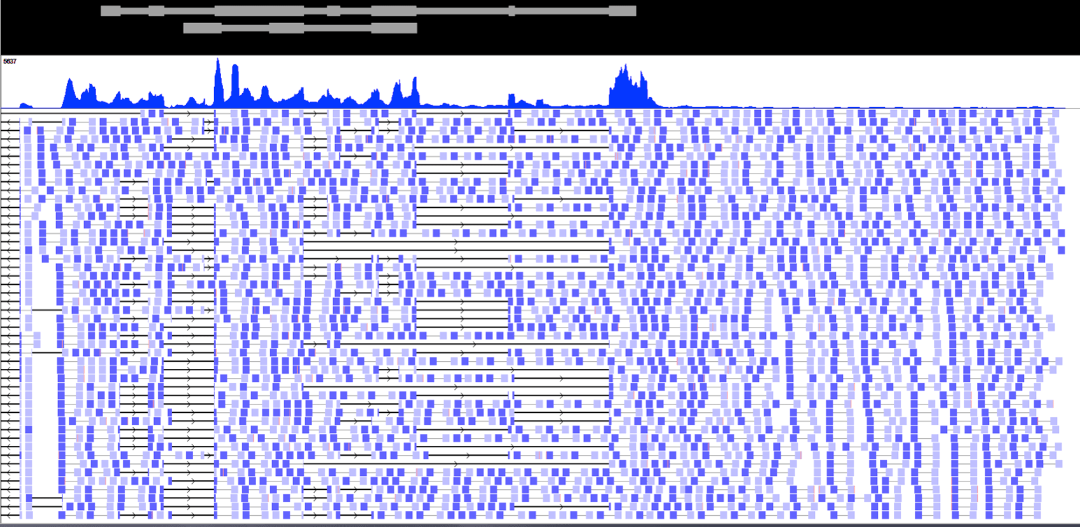 Triche.AK paired end RNA Seq.png
