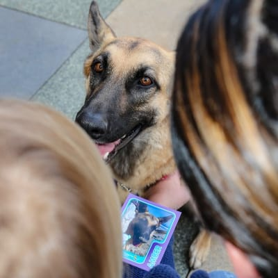 chla-amber-three-legged-therapy-dog-trading-card.jpg
