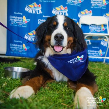 chla-therapy-dogs-walk-la-1.jpg