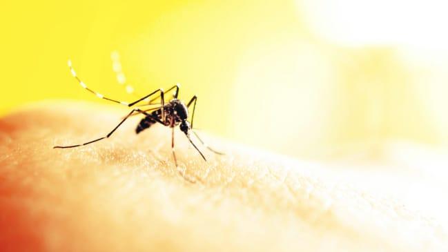 chla-zika-virus-header.jpg